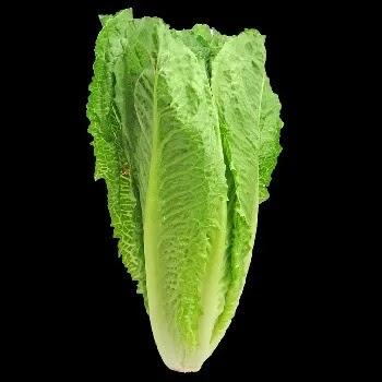 हरितक, lettuce vegetables name in Marathi