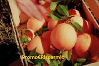 Logo Condividi e vinci 20 kg di limoni e arance con AgriBio Jalari