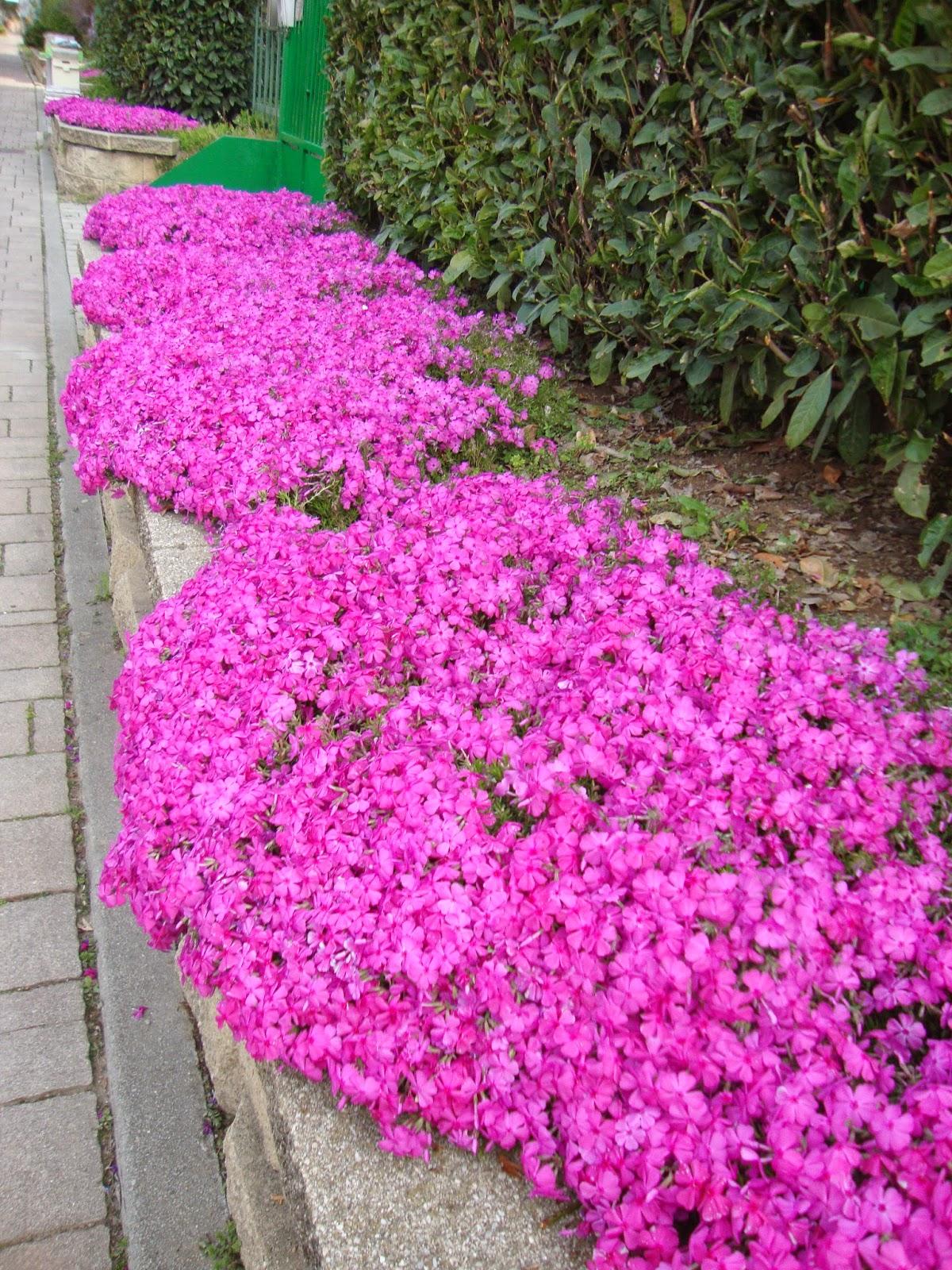 Un piccolo giardino in citt giardinaggio da marciapiede for Cespugli da giardino sempreverdi