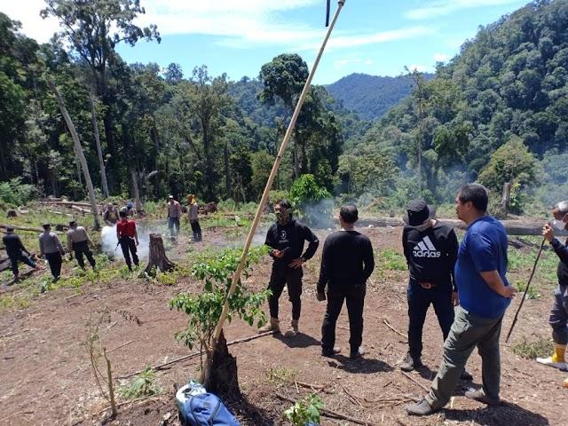 Polri Musnahkan 7 Hektare Ladang Ganja Di Gunung Lauser Dan Sita 592 Kg Ganja Kering