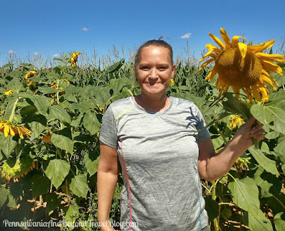 Strites' Orchard Farm Market in Harrisburg Pennsylvania - Picking Sunflowers
