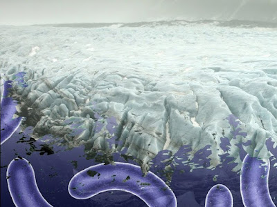 Viruses Trapped Underneath The Ice