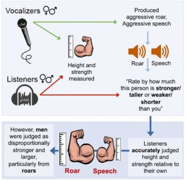 Humans to estimate formidability by vocals alone