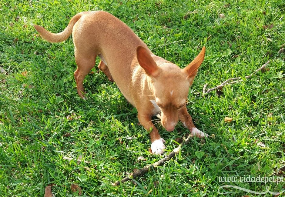 fazer uma festa ao cão sem pedir licença aos donos + festas + blogue português + animais de estimação + vida de pet
