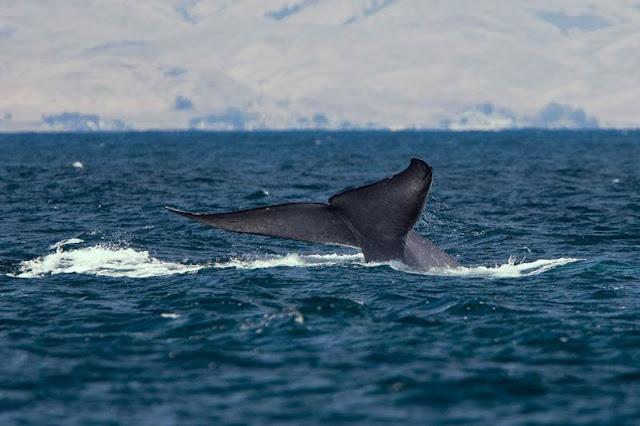 Blue Whale: Προστατέψτε τα παιδιά σας από την αυτοκαταστροφική online μάστιγα