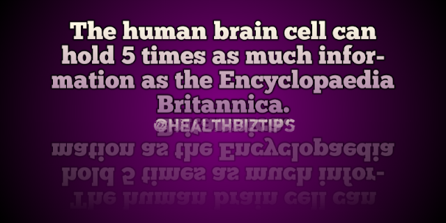 The human brain cell can hold 5 times as much information as the Encyclopaedia Britannica.