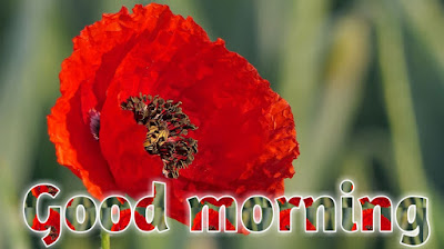 Good morning flower pictures