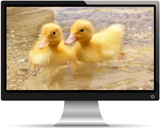 2 Bébés Canard dans l'Eau - Fond d'écran en Full HD 1080p
