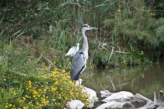 Parc Ornithologique du Pont De Gau. Орнитологический парк. Камарг.