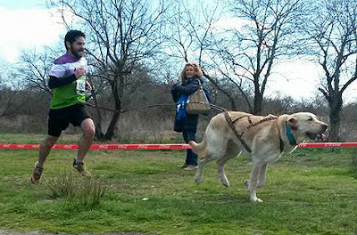 Club Mushing Aranjuez