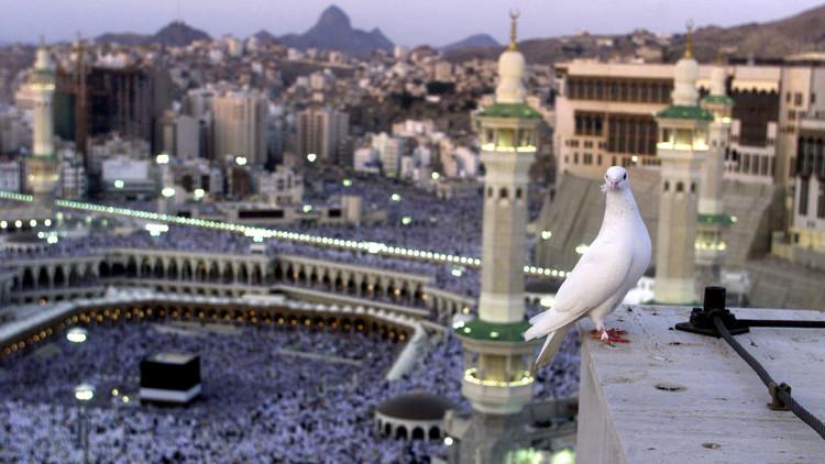 صورة لحمامة بيضاء تقف علىأحد الأسوار في المسجد الحرام