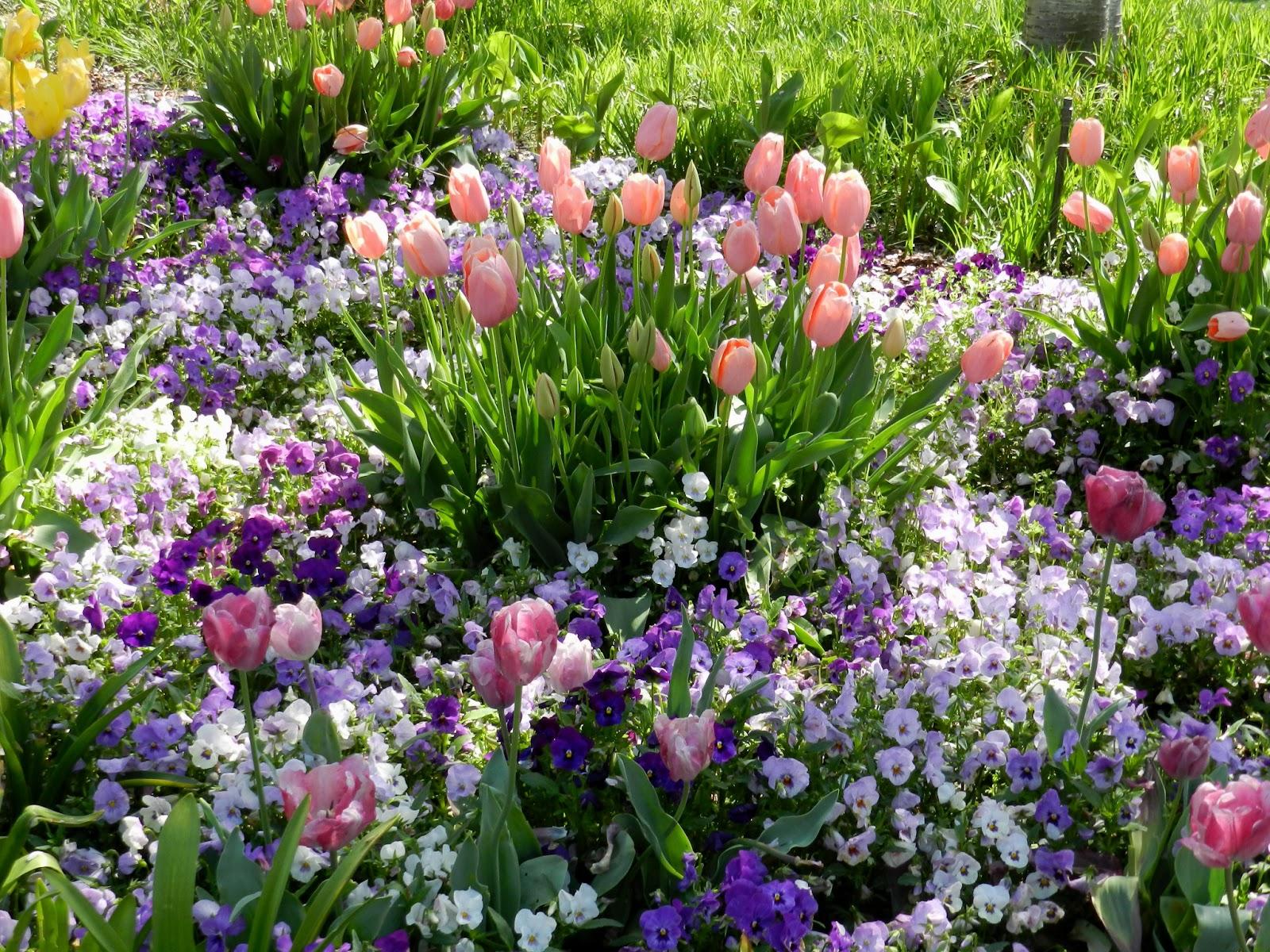 Prairie Rose's Garden April 2013