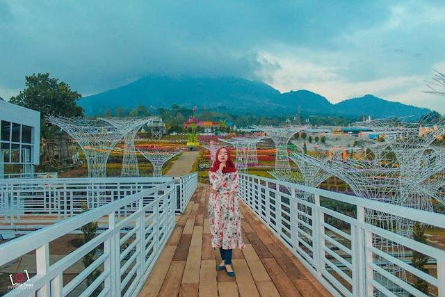 Wisata Taman Bunga Celosia Semarang