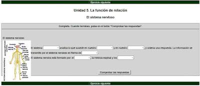 https://cplosangeles.educarex.es/web/cono_tercer_ciclo/relacion/actividades_unidad_5/nervioso01.htm