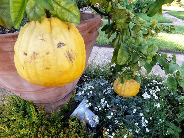 gênes genova villa dep principe jardins