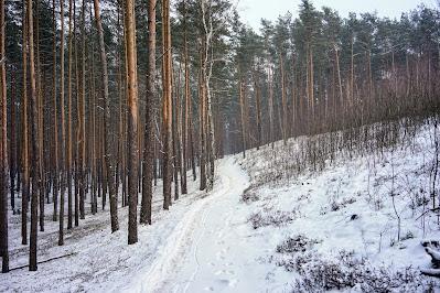 Na szlaku żółtym z Wierszy do Zaborowa Leśnego