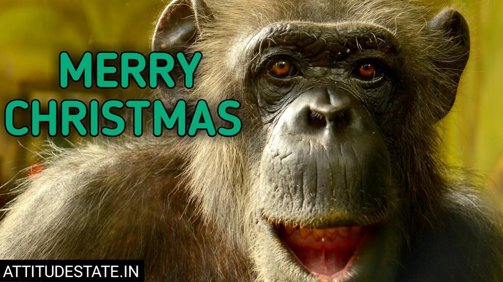funny merry christmas greetings