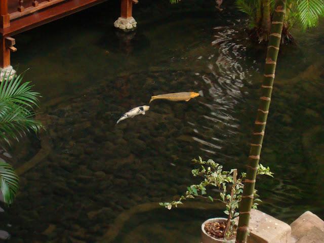 Изображение пруда во внутреннем дворе отеля
