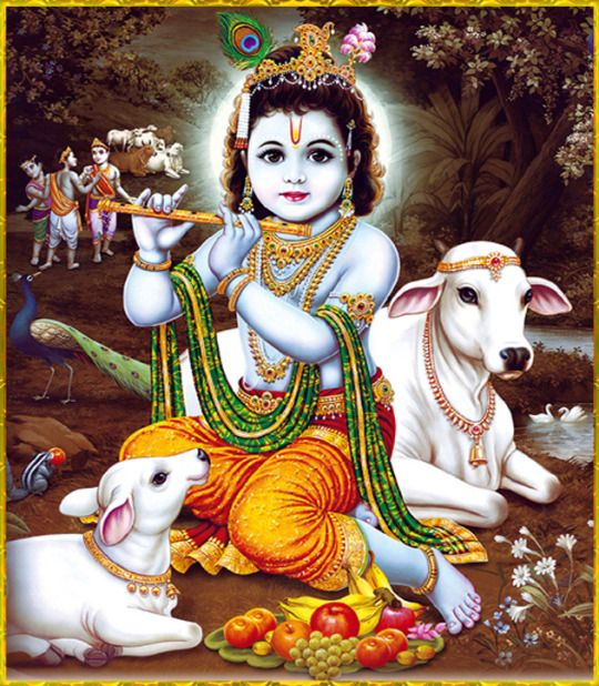 Cute Lord Krishna Wallpaper with Cow