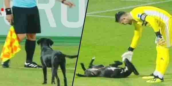 الكلب يعطل مباراة كرة قدم ، مباريات جورجيا الروسية