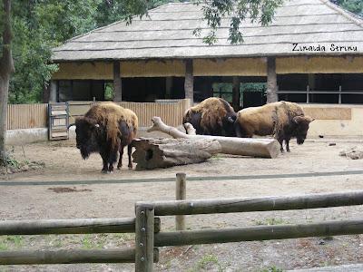 zoo-roma-zimbri