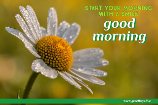 start your morning with smile! Good morning message with white flowers