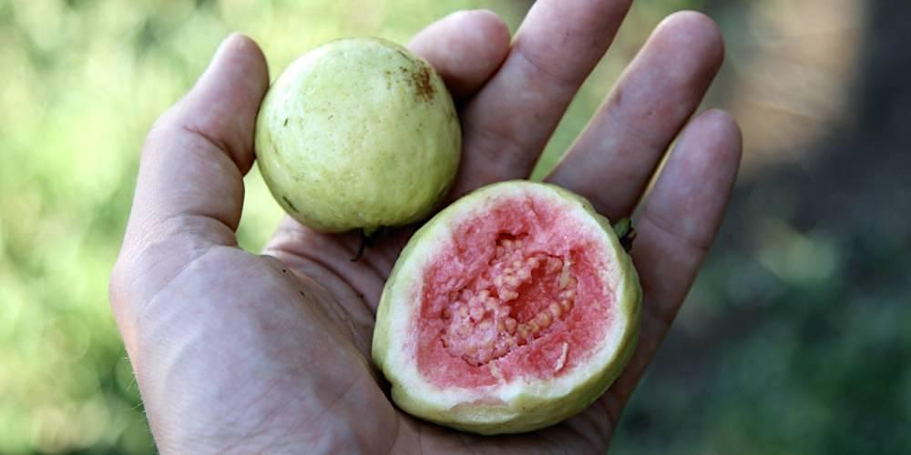 literatura paraibana frutas liberdade infancia