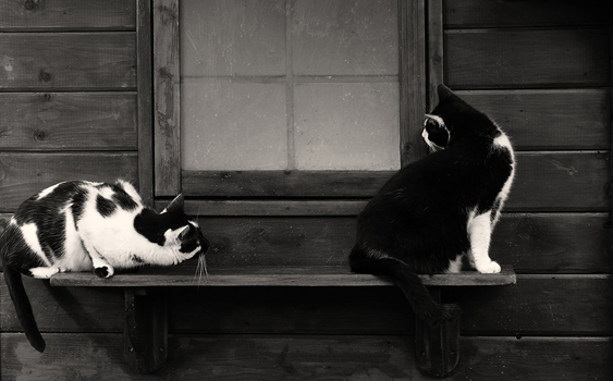 kissan kulttuurinen asema: kissat saduissa: pekka töpöhäntä