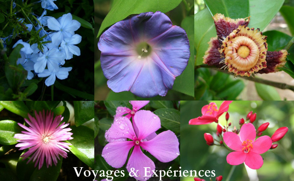 Préférence Voyages et Expériences : Fleurs de l'Ile Maurice: Beautés de la  UI21