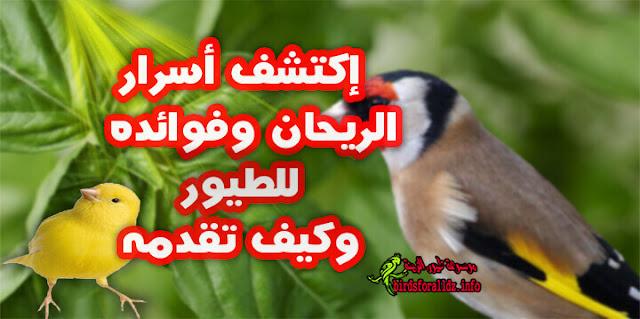 فوائد نبات الريحان للطيور وخاصة الحسون