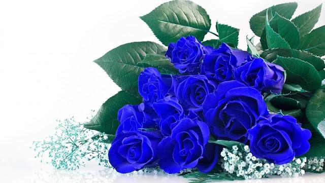 Truyện ngắn: Hoa hồng xanh (Chap 3)