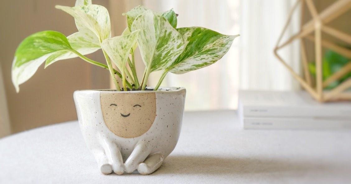 ミライノシテンほっこりする!植物を育てたくなる可愛い植木鉢!【a】