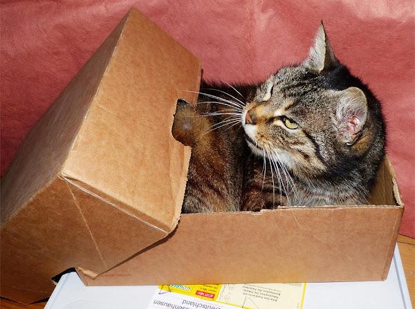 Cat in a Box, by Jakob Strauß on Pixabay