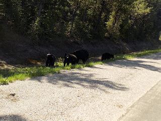Family of Four Fearless Black Bears