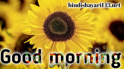 Good morning latest photos images wallpaper pictures download for free