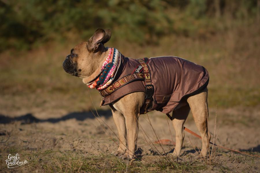 Hundemantel Wintermantel Mantel passend für Mops und Französische Bulldogge von Wolters