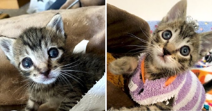 This Rescue Kitten Is So Tiny That He Wears Socks As Sweaters