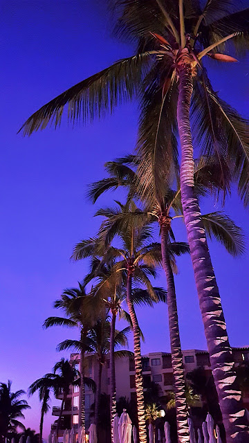 Palm trees line up for the sunrise...