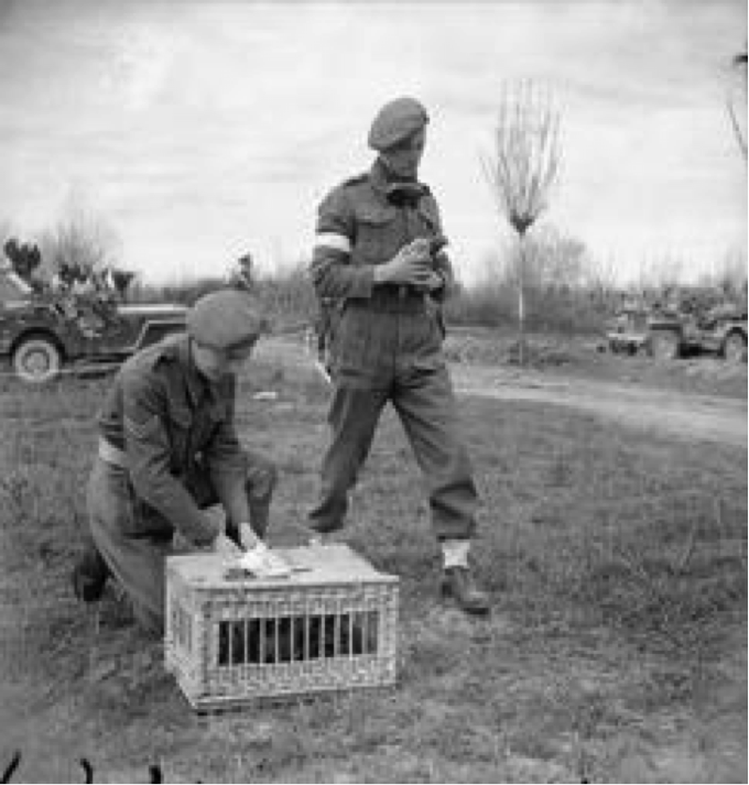 World War 2 Military Intelligence: July 2015
