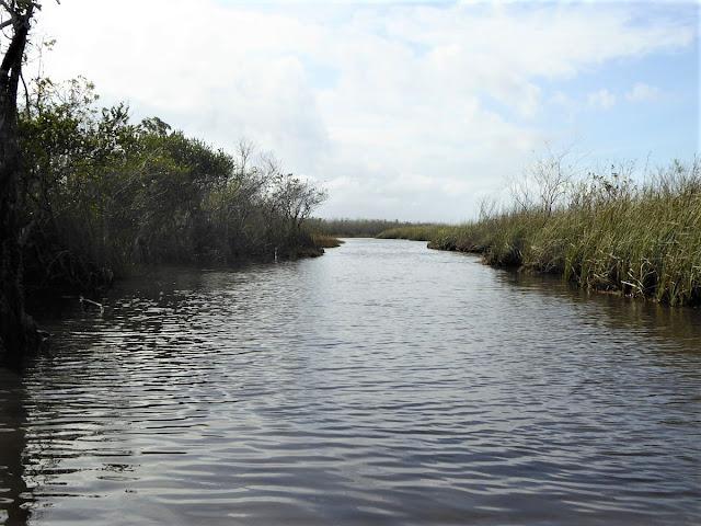 canale di mangrovie durante escursione airboat
