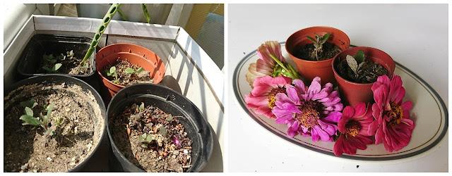 małe kwiaty