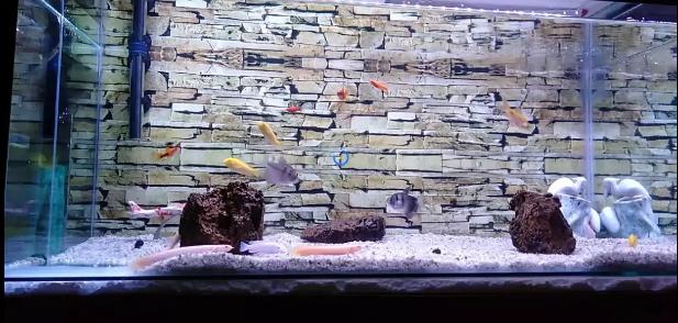 3 Toko Aquarium di Margacinta Ciwastra Bandung