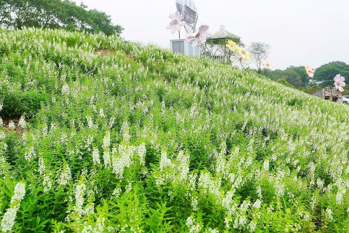 Vẻ đẹp của Thảo Nguyên Hoa Long Biên.