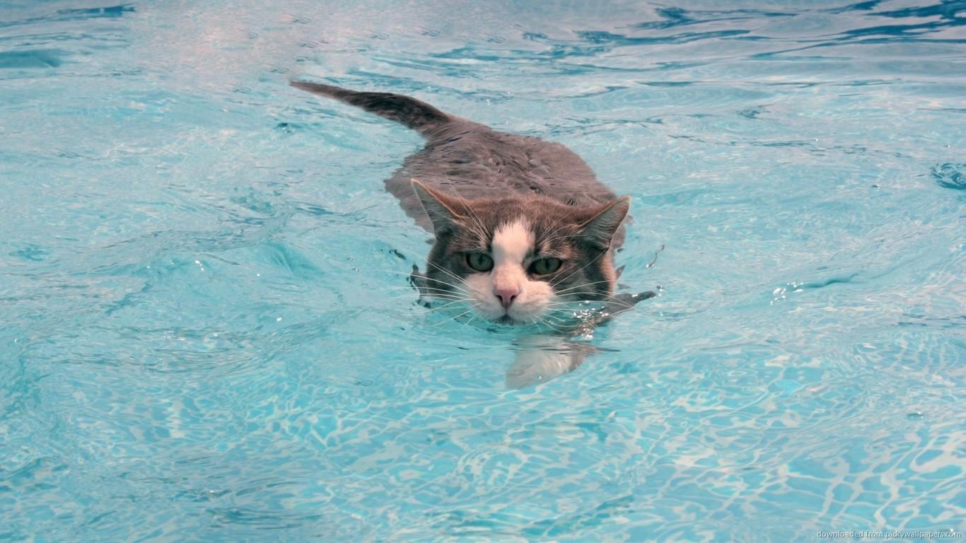 Gato com cara de quem tá muito puto nadando na piscina