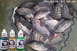Essen Ikan Nila Khusus Harian