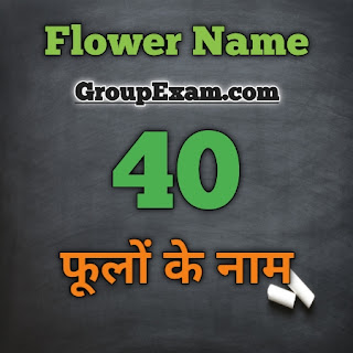 Flower Name Hindi and English