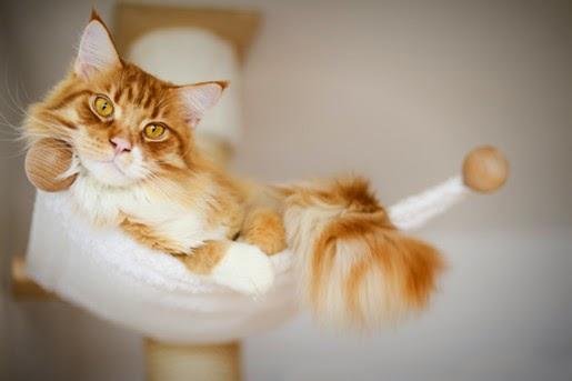 Karmy Brit Care dla kotów w nowej odsłonie