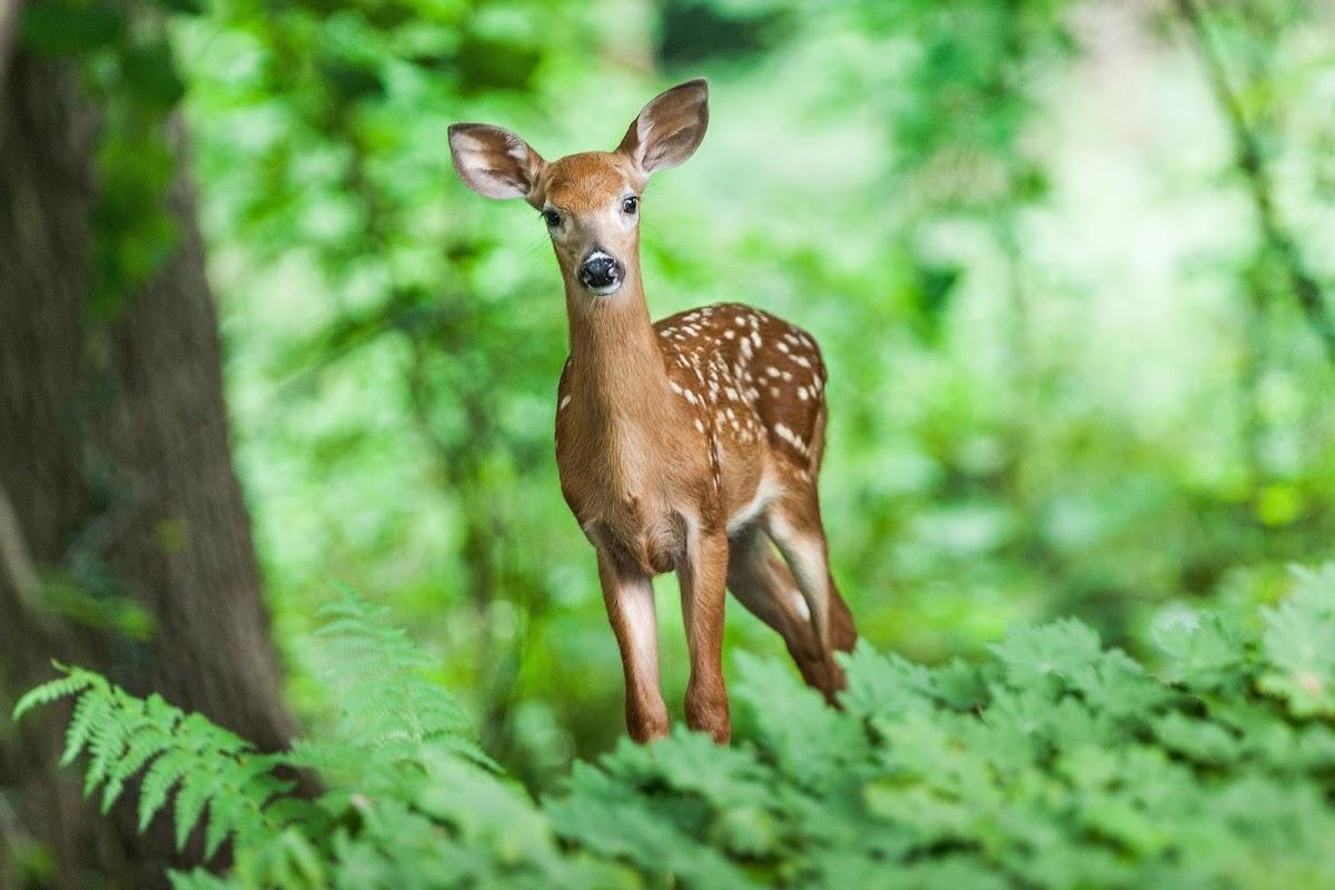 Download Wallpaper  picture deer new gallery 10