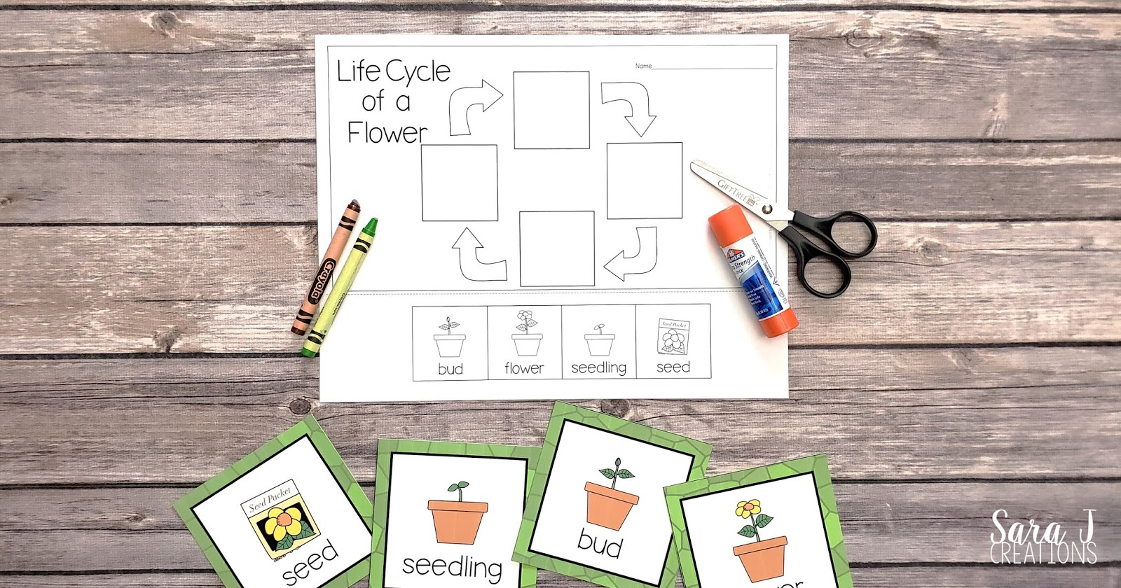 Learn about the life cycle of a flower with these free printables! Practice sequencing the life cycle with these cards and then complete a cut and glue activity.
