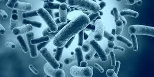 Pastikan Ponsel Terhindar dari Bakteri
